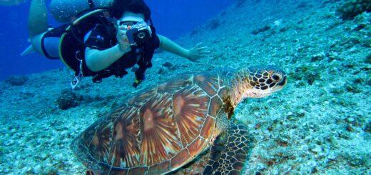 Taucher-Inseln-